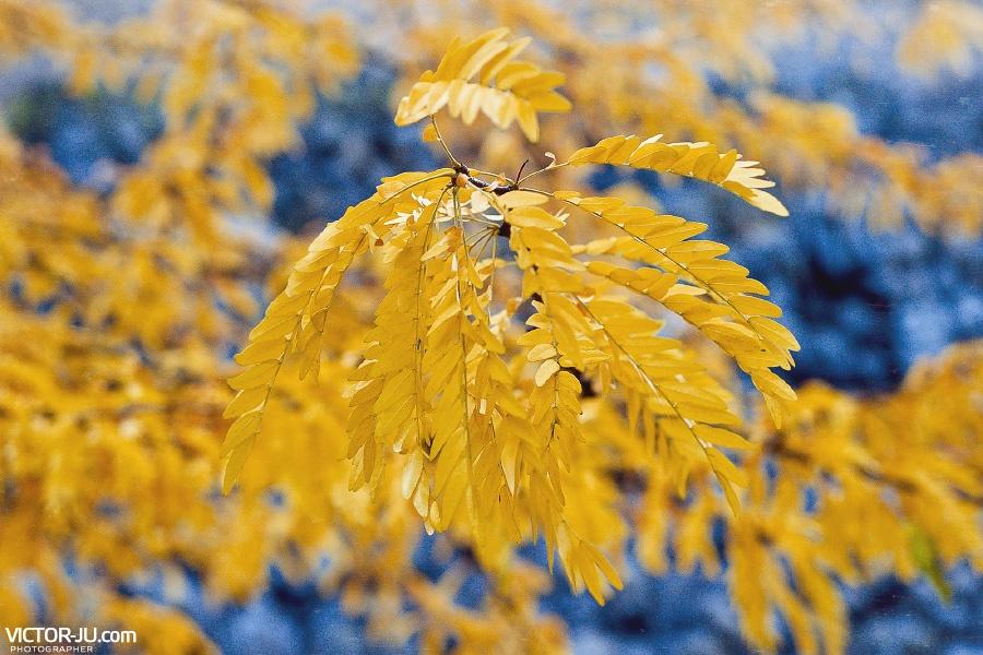 Осень в Европе