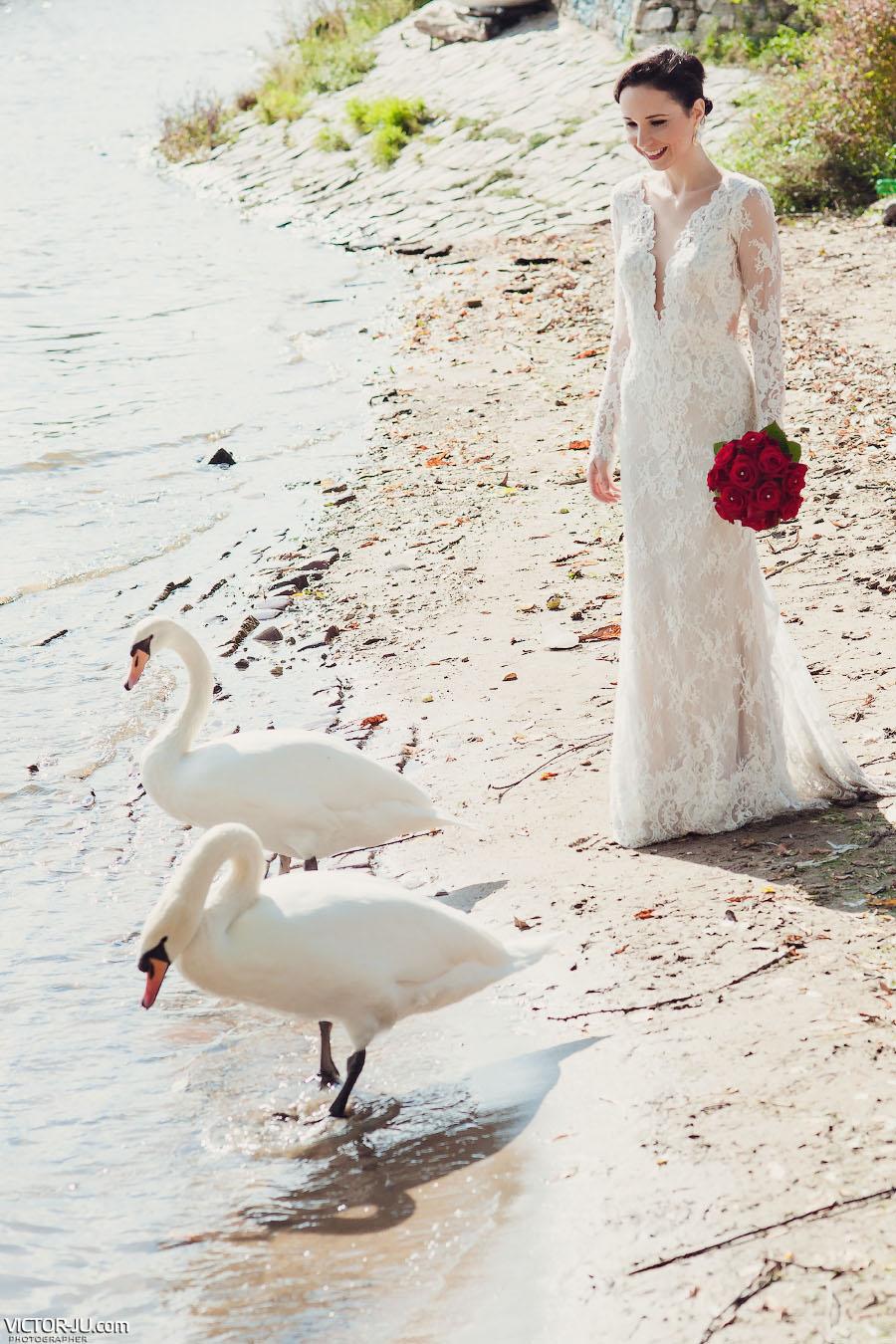 Белые лебеди и невеста в Праге