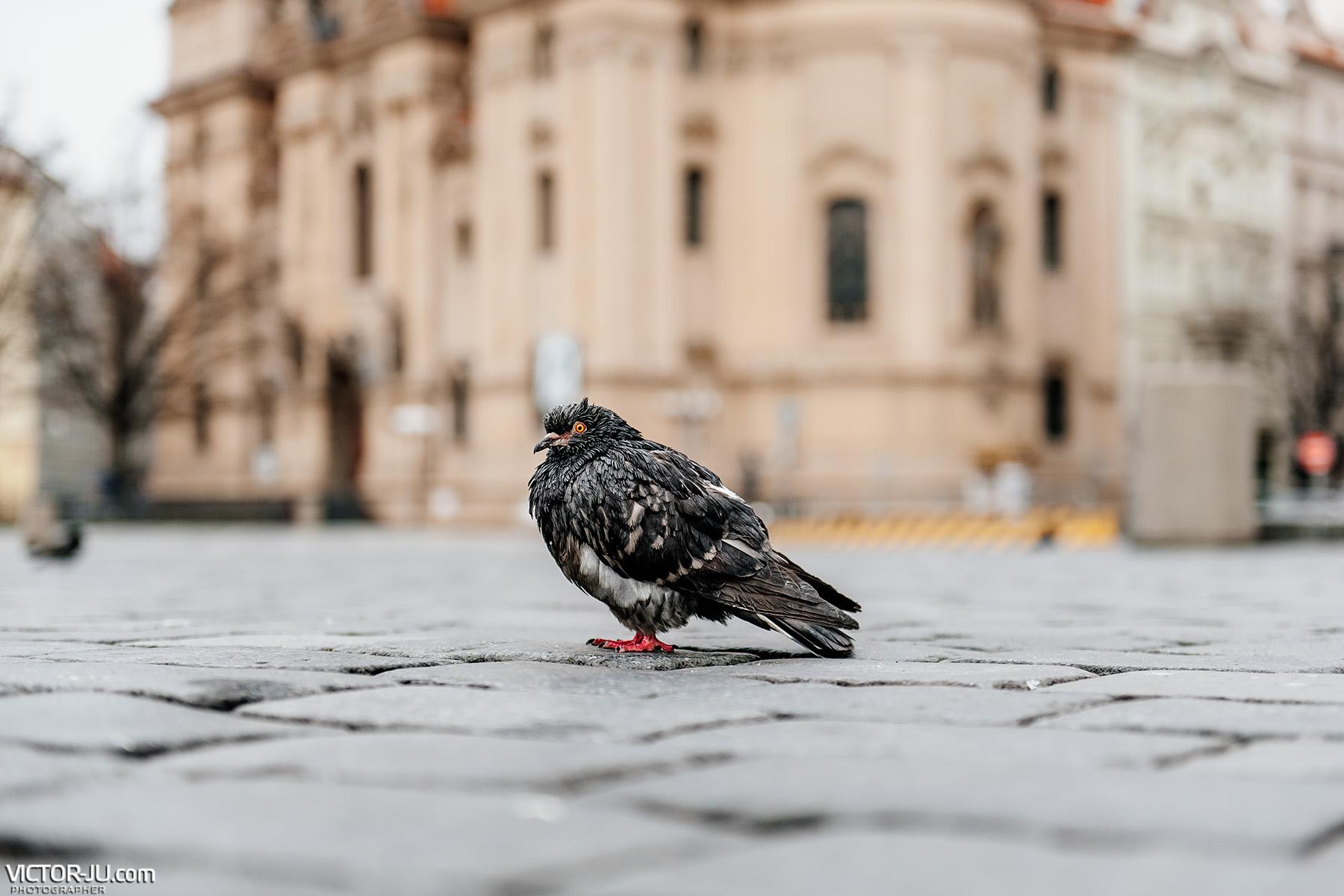 Коронавирус Прага