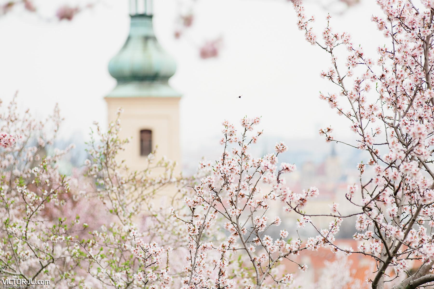 Весна в Праге 2020 коронавирус