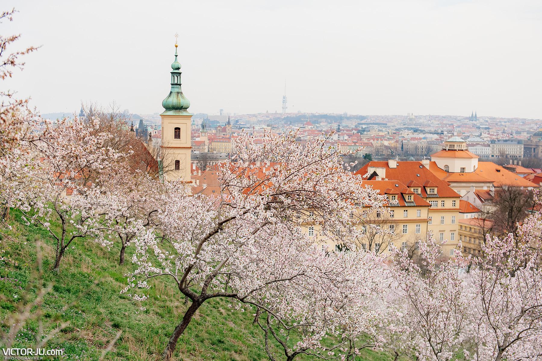 ситуация  с коронавирусом в Чехии