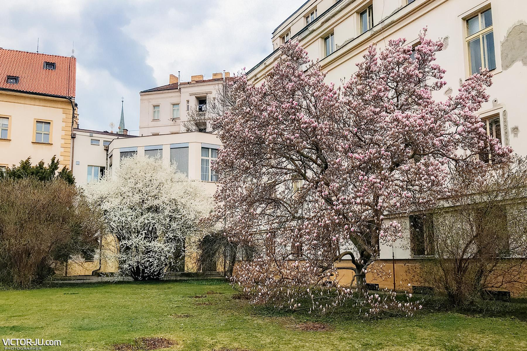 Цветущие сады Праги